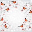Bullfinch birds on branches winter background — Stock Vector