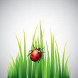 Stock Vector: Ladybug on green grass vector background