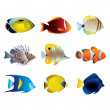 Tropical fishes vector set — Stock Vector