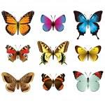 Butterflies photo-realistic vector set — Stock Vector