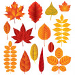 Autumn leaves vector set — Stock Vector