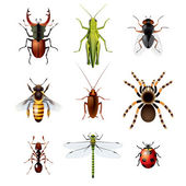 Set of insects on white background — Stock Vector