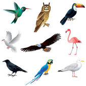 Birds isolated on white vector set — Stock Vector