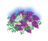 Beautiful lilac bush — Stock Vector