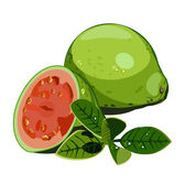 Vector realictic juicy guava — Stock Vector