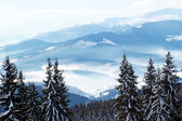 Beautiful snowy peaks of Carpathian Mountains — Stock Photo