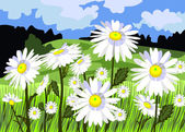 Beautiful meadow with daisies — Stock Vector