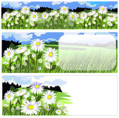 Banners and backgrounds with beautiful chamomile meadow — Stock Vector