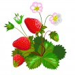 Stock Vector: Strawberry with flowers