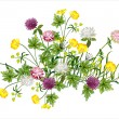 Stock Vector: Beautiful composition of wild flowers