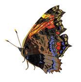Beautiful isolated dark butterfly — Stockvektor