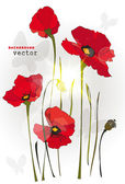 Red poppy flowers and butterflies on white background. Vector illustration — Stock Vector