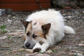 Doghouse — Stock Photo