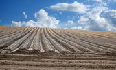 Plowed field in spring time — Stock Photo