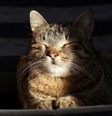 Sleeping cat — Stock Photo