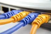 网络电缆连接到交换机 — 图库照片
