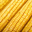 Foto de Stock  : Corn close up