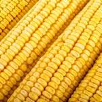 Corn close up — Stock Photo