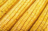 トウモロコシをクローズ アップ — ストック写真