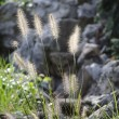Grass in garden — Stock Photo