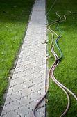 Cesty v zahradě — Stock fotografie