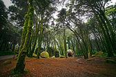 Round rocks covered with moss in an old forest in Sintra. Portug — Stock Photo