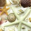 Cluster of Seashells Seamless Background Pattern - Stock Photo
