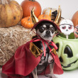 Cute Halloween Devil Dog - Stock Photo
