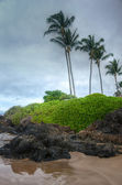 Scenic Maui Shoreline — Stock Photo