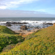 Stock Photo: Pescadero State Beach