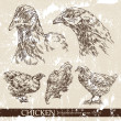 Chicken — Stockvectorbeeld