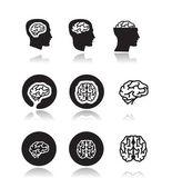 Brain. Vector format — Stock Vector