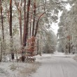 Stock Photo: Winter landscape with forest road and trees covered with rime
