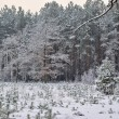 In the woods in winter — Stock Photo
