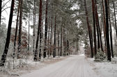 Winter landscape with forest road and trees covered with rime — Stock Photo