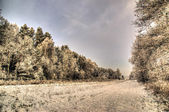 Winter forest landscape painterly — Stock Photo