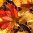 The autumn collection of colors — Stock Photo