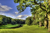 Afternoon among the oaks and beeches — Stock Photo