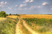 Rural road through the fields — Stock Photo