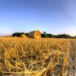 Bales of straw after harvest grain — Stock Photo