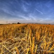 Stubble after harvest grain at sunset light — Stock Photo