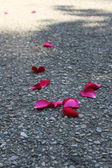 Rose leaves — Stock Photo