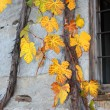 Yellow leaves — Stock Photo #36038547