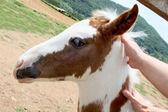 Little foal — Stock Photo