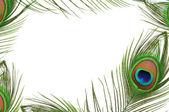 Frame of peacock feather eye — Stock Photo