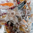 Stock Photo: Background of flowers frozen in ice