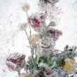 Background of flowers frozen in ice — Stock Photo #19294871