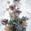 Background of flowers frozen in ice — Stock Photo
