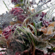 Background of flowers frozen in ice — Stock Photo #19294885