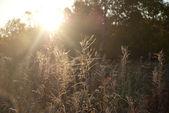 Mráz na trávě — Stock fotografie